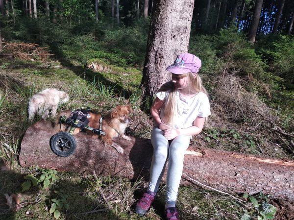 Unterwegs mit Hund im Hunderollwagen
