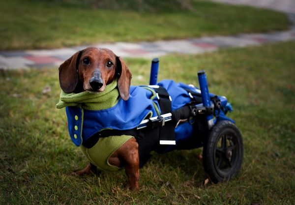 Poncho für kleine Hunde, passend zum Fußsack