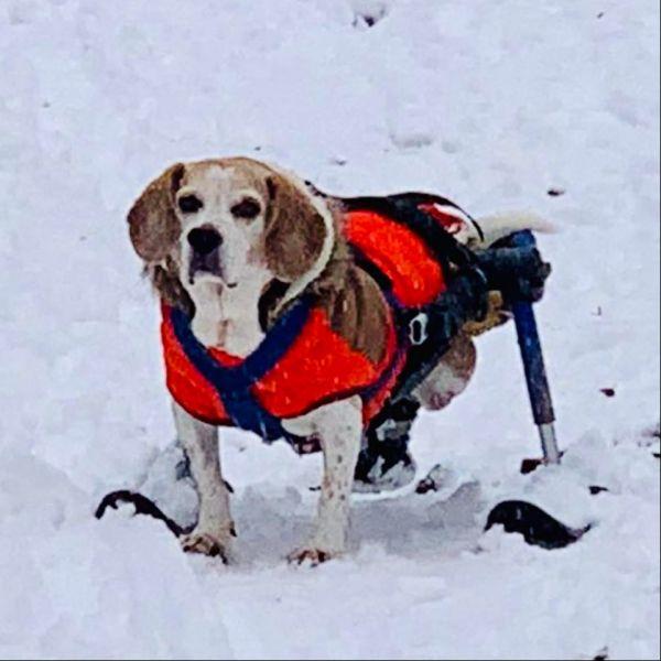 Ski mit Strebe für Rollwagen M/L