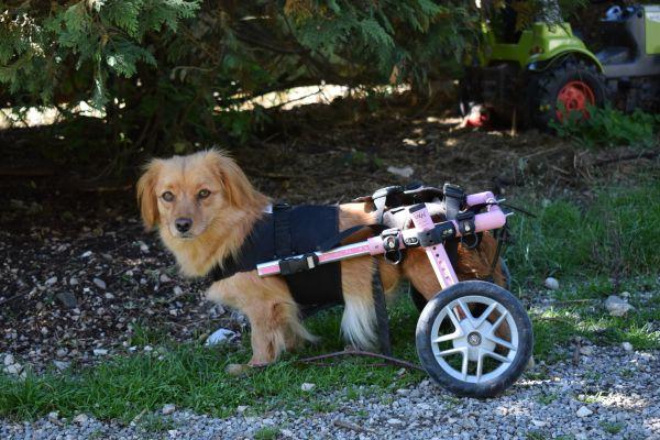 Mietrollwagen, Hunde 5-11 kg