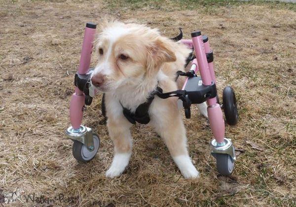 Mietrollwagen 4 Räder, Hunde 5-11 kg