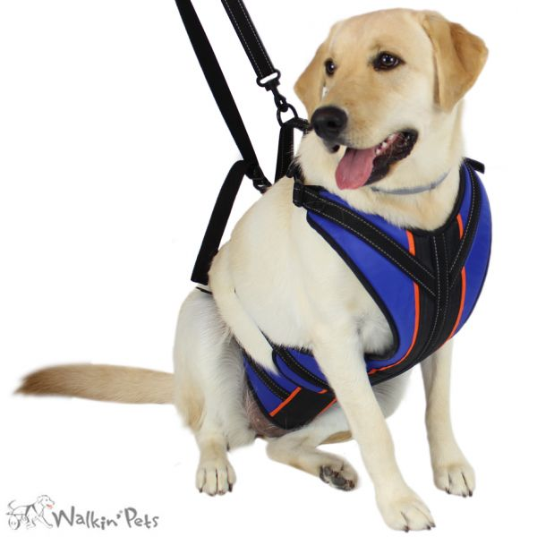 Lift´n Step Harness