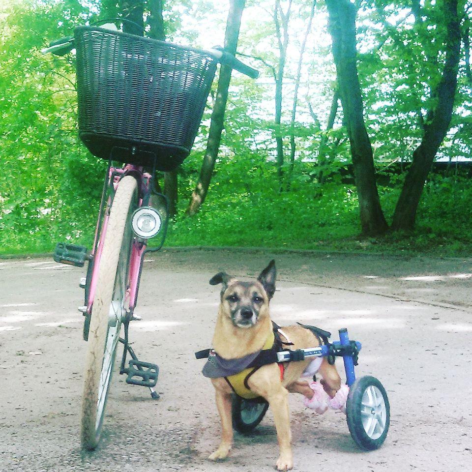 Rollwagen Für Hunde