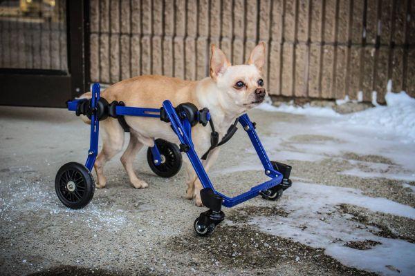 Mietquad 4 Räder für kleine Hunde und Katzen bis 5kg